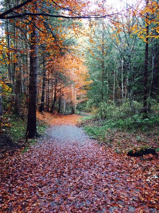112717 fall path