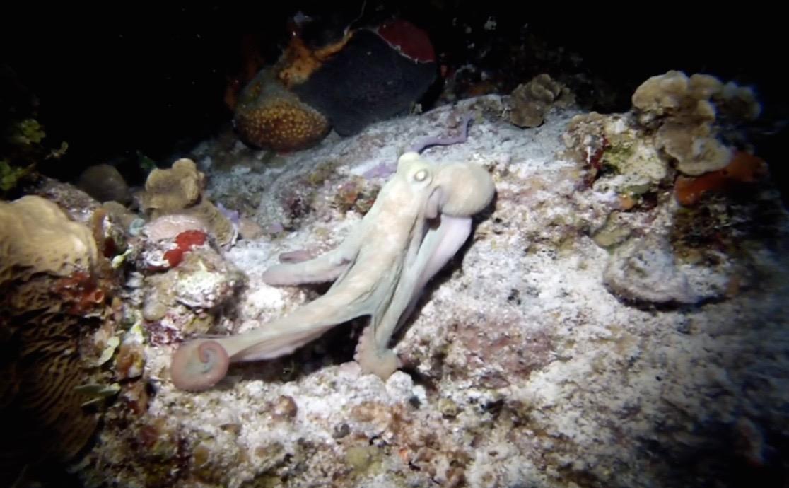 Octopus deep sea inspiration