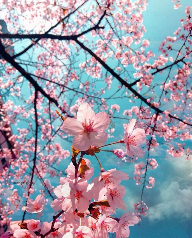 Spring, Flower, Blossom, K Brunini