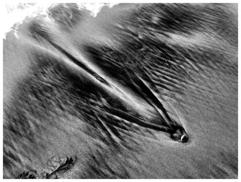 sand-birds1-480x363