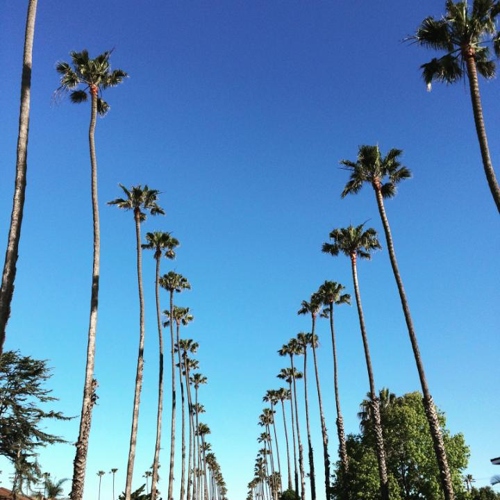 K Brunini, Jewels, Southern California, California, Palm Trees